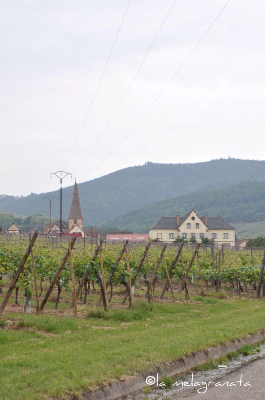 vigne2-W900