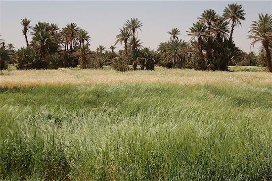 30 oasi di Mhamid
